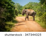 big bull asian elephant... | Shutterstock . vector #347344325