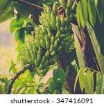 Bunch Of Green Bananas On Tree...