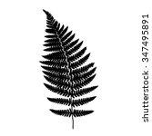 fern frond black silhouette.... | Shutterstock .eps vector #347495891