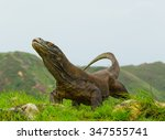 Komodo Dragon Is On The Ground...