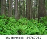 forest with cedar trees and... | Shutterstock . vector #34767052