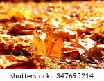 golden autumn leaves on the... | Shutterstock . vector #347695214