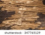Termite Nest On Bark Of Tree