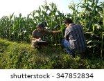 farmer checking his cornfield   ...