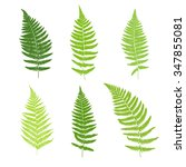 Set Of Fern Frond Silhouettes....