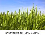 green grass, water drops and blue sky / background - stock photo