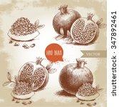 hand drawn organic pomegranates ... | Shutterstock .eps vector #347892461