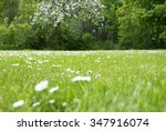 Flower Meadow With Daisy...