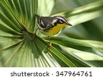 yellow throated warbler  | Shutterstock . vector #347964761