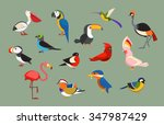 Stock vector flat design vector birds icon set popular birding species collection exotic bird set in flat 347987429