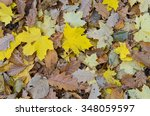 autumn mixed leaves as a... | Shutterstock . vector #348059597