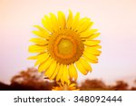 sunflower field | Shutterstock . vector #348092444