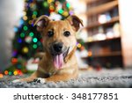 Small Cute Funny Dog Laying At...