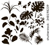 Hand drawn branches and leaves of tropical plants. Set of  black silhouettes on white background.