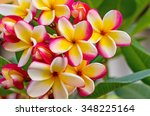 white   pink and yellow... | Shutterstock . vector #348225164