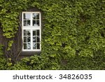 An Green Ivy Covered Wall With...