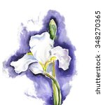 White Iris Flower Or Fleur De...