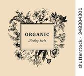 hand drawn vector herbs.... | Shutterstock .eps vector #348304301