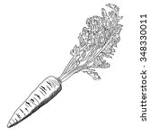 fresh carrot stick hand drawn... | Shutterstock .eps vector #348330011