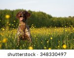 Stock photo dog in a field of flowers 348330497