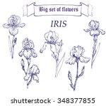 Hand Drawn Illustration Of Iri...