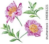 purple peonies and leaves ... | Shutterstock . vector #348381221