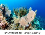 fans and corals on a colorful... | Shutterstock . vector #348463049