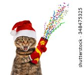 Funny Cat In Christmas Hat Wit...