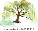 willow tree on the ground... | Shutterstock .eps vector #348542417