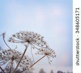 winter background   Shutterstock . vector #348605171