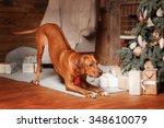 rhodesian ridgeback dog ... | Shutterstock . vector #348610079