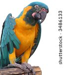 funny parrot against a white... | Shutterstock . vector #3486133