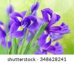 Fresh Blue  Irise Flowers  Ove...