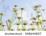 landscape with chamomiles field ... | Shutterstock . vector #348644837
