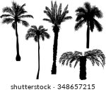 illustration with palm... | Shutterstock .eps vector #348657215
