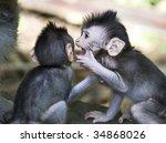 sibling monkies whispers   Shutterstock . vector #34868026