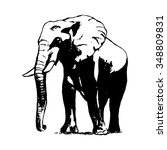 graphic image of an elephant    Shutterstock .eps vector #348809831