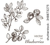blueberries. hand drawn ink... | Shutterstock .eps vector #348873275