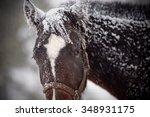 Wet Sad Brown Horse Under The...