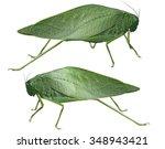 Long Horned Grasshoppers ...