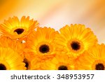 orange gerber flowers on color... | Shutterstock . vector #348953957