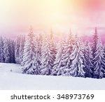 Majestic Winter Trees Glowing...