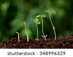 plant growth new beginnings | Shutterstock . vector #348996329