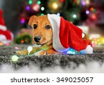 Small cute funny dog playing with garland in Santa hat on Christmas background - stock photo