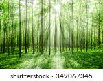 forest trees. nature green wood ... | Shutterstock . vector #349067345