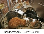 lunch in the cat shelter.... | Shutterstock . vector #349139441