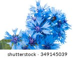 Beautiful Blue Cornflower...