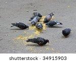 Pigeons Feeding Itself On A...