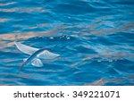 flying fish | Shutterstock . vector #349221071