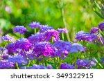 purple candytuft flowers   Shutterstock . vector #349322915